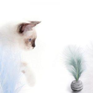 Balle pour chat